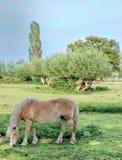 Campo do cavalo de Tilburg Imagem de Stock