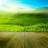 Campo do chá Fotografia de Stock