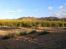 Campo do citrino da campanha em spain fotografia de stock royalty free