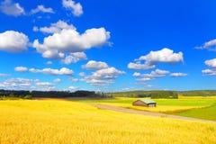 Campo do fazendeiro Imagens de Stock