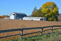 Campo do feijão de soja na parte dianteira uma exploração agrícola Fotografia de Stock Royalty Free
