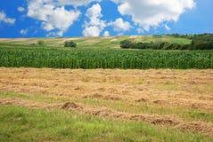 Campo do feno e de milho Fotos de Stock