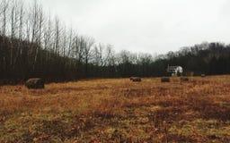 Campo do feno no meio do inverno imagens de stock