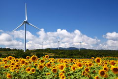 Campo do girassol com moinho de vento Fotografia de Stock Royalty Free