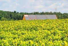 Campo do girassol e planta solar Imagens de Stock Royalty Free