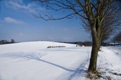 Campo do inverno Imagem de Stock Royalty Free