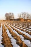 Campo do inverno Imagem de Stock