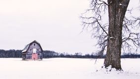 Campo do inverno com celeiro e árvore fotografia de stock royalty free