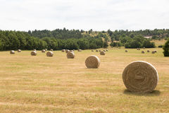 Campo do milho e monte de feno em Provence fotos de stock