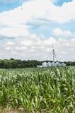 Campo do milho verde com um céu azul brilhante fotos de stock royalty free