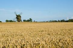 Campo do moinho de vento e de trigo Fotos de Stock