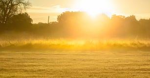 Campo do nascer do sol com gramas altas Fotos de Stock Royalty Free