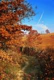 Campo do outono Fotografia de Stock Royalty Free