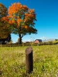 Campo do outono Fotos de Stock