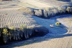 Campo do outono com as árvores de vidoeiro douradas imagens de stock