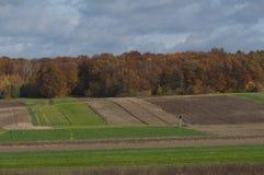 Campo do outono no Polônia Fotografia de Stock