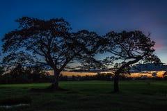 Campo do por do sol das árvores fotos de stock royalty free