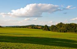 Campo do prado Foto de Stock