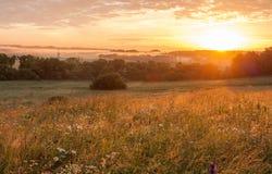 Campo do prado da flor no campo no por do sol do nascer do sol Fotos de Stock Royalty Free