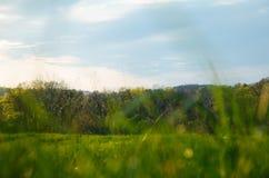Campo do rés do chão com as árvores no fundo imagem de stock royalty free