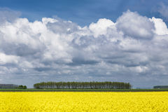 Campo do rapeseed Fotografia de Stock
