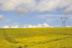 Campo do Rapeseed com linha eléctrica fotografia de stock