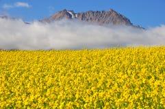 Campo do rapeseed com montanhas imagem de stock