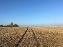 Campo do restolho do milho após a colheita, Somerset, Inglaterra imagens de stock royalty free