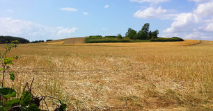 Campo do ` s do fazendeiro no verão Fotografia de Stock
