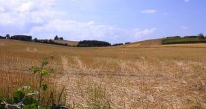 Campo do ` s do fazendeiro no verão Imagens de Stock