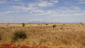 Campo do savana na temporada de ver?o fotos de stock