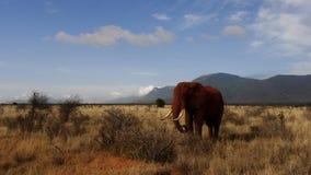 Campo do savana na temporada de ver?o imagens de stock royalty free