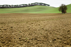 Campo do solo de argila com fundo verde em Toscânia Foto de Stock