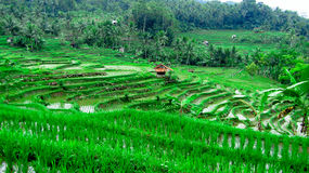 Campo do terraço do arroz, em Tasikmalaya, Java ocidental, Indonésia fotografia de stock