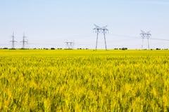 Campo do trigo de amadurecimento com pilões da eletricidade Fotografia de Stock Royalty Free
