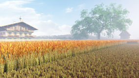 Campo do trigo dourado Fotos de Stock