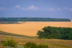 Campo do trigo dourado Paisagem rural do verão foto de stock royalty free