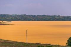 Campo do trigo dourado Paisagem rural do verão imagens de stock royalty free