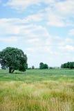 Campo do verão Imagens de Stock Royalty Free