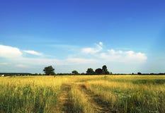 Campo do verão Imagem de Stock