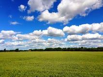 Campo do verão com árvores e casa da quinta no horizonte em Lincolnshire, Inglaterra foto de stock