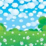 Campo do verão com as camomilas Imagem de Stock