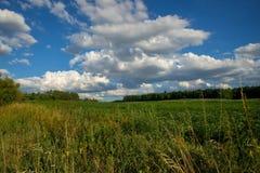 Campo do verão com campo, prado, céu, nuvem Foto de Stock