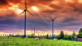 Campo do verão com turbinas eólicas e campo agrícola com pastagem de vacas vídeos de arquivo