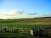 Campo do verão e céus azuis Imagens de Stock Royalty Free