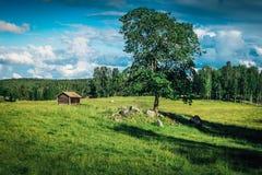 Campo do verão na Suécia imagem de stock