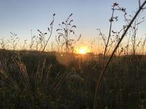 Campo do verão no por do sol com grama da pena foto de stock