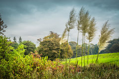 Campo do verde Fotografia de Stock Royalty Free