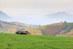 Campo do verde do arroz Foto de Stock