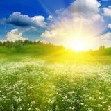 Campo do verão da beleza sob o sol brilhante da noite Fotografia de Stock Royalty Free